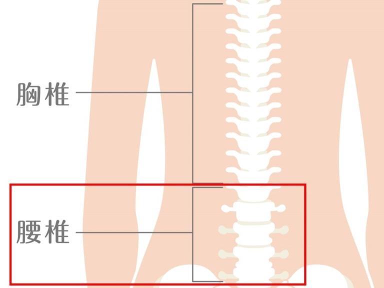 腰椎 イラスト